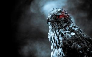 Fondo de pantalla de ave