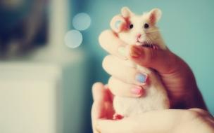 Fondo de pantalla de tierno Hamster