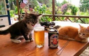 Fondo hd de un par de gatos tomando cerveza
