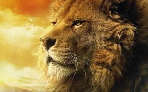 Fondo de pantalla cabeza de leon