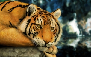 Fondo de pantalla tigre esperando a la presa