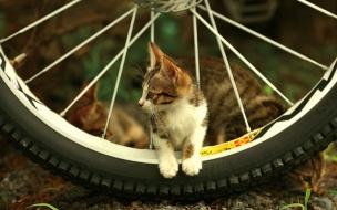Fondo de pantalla gatito jugueton