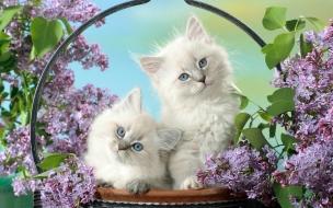 Fondo de pantalla gatos blancos
