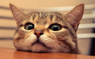 Fondo de pantalla gato mirando