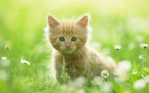 HD Animals wallpapers Cute Kitten