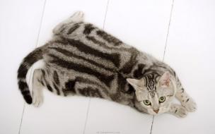 Cats animals feline cute