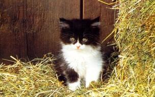 Fondo de pantalla gato bebe