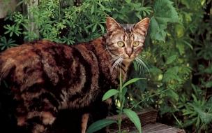 Fondo de pantalla de gato sapo