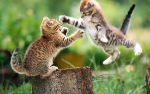 Fondo de pantalla gato saltando