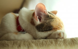 Fondo de pantalla gato durmiendo