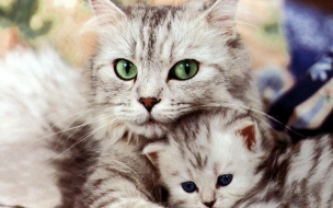 Cat hugging wallpapers