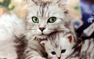 Cat hugging wallpapers