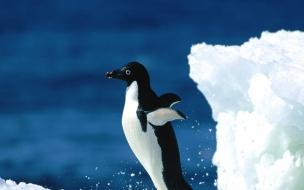 Fondo de pantalla de pinguino solitario