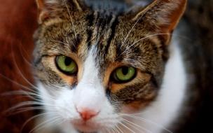 Fondo de pantalla gato ojos verdes