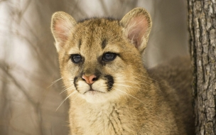 Fondo de pantalla guepardo bebe mirando