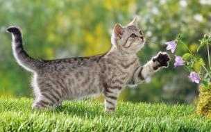 Fondo de pantalla gato ocioso