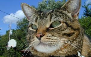 Fondo de pantalla gato de ojos verdes