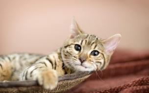 Fondo de pantalla gato triste