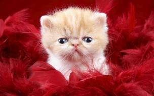 Fondo de pantalla gato en plumas rojas
