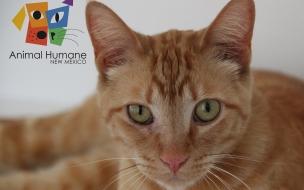 Fondo de pantalla gato cafe