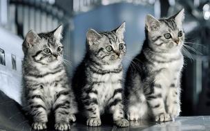 Fondo de pantalla gatitos mirando