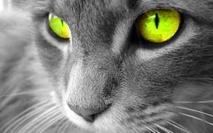 Fondo de pantalla gato con ojos lindos