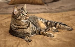 Fondo de pantalla gato mirando atento