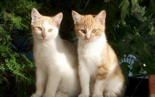 Fondo de pantalla gatos mirando