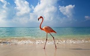 Fondo Flamenco en la Playa
