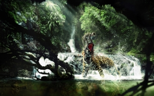 Wild life animal wallpapers