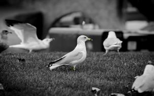 Gaviotas en blanco y negro