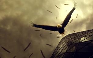 Fondo Aguila en vuelo
