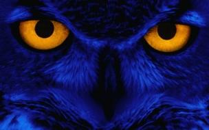 Imagen de Aguila
