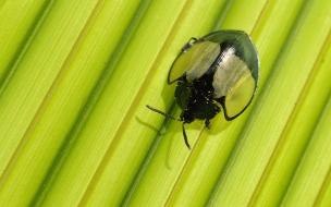 Foto insecto muy curioso