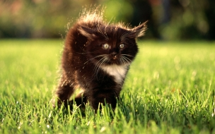 Fondo de pantalla gato cafe asustado
