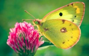 Mariposa en flor color rosa