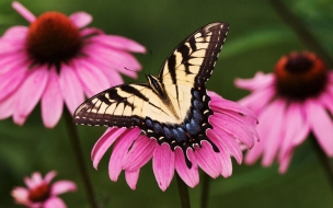 Mariposa Con alas manchadas