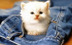 Fondo de pantalla gato asustado