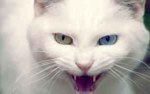 Fondo de pantalla gato blanco