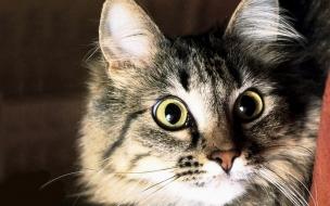 Fondo de pantalla gato con hambre