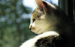 Fondo de pantalla gato esperando