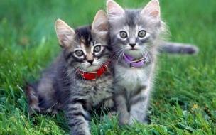 Fondo de pantalla gatitos en cesped