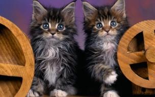 Fondo de pantalla hermanos gatos jugando