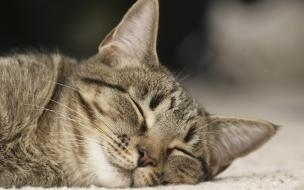 Fondo de pantalla gato dormido en tierra