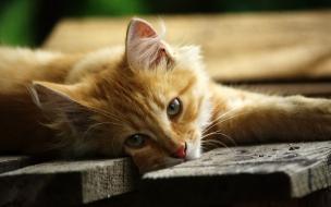 Fondo de pantalla gato acostado