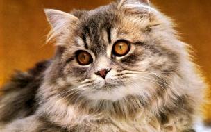 Fondo de pantalla gato observando