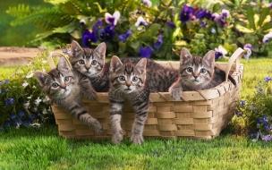 Fondo de pantalla gatitos en cesta