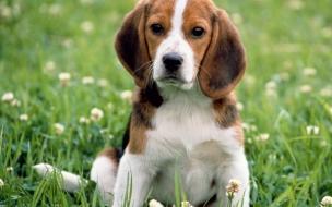 Fondo de pantalla perro solo en jardin