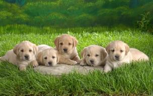 Fondo de pantalla pintura de perros