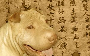 Fondo de pantalla perro sonriendo